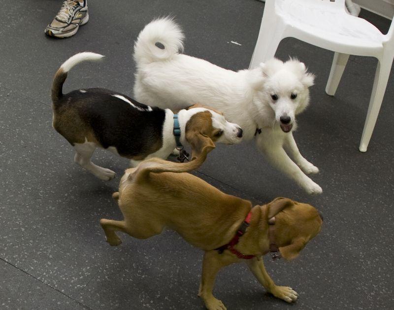 Puppiesrunning