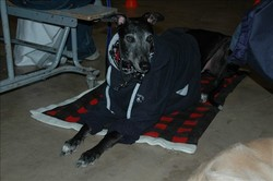 Buddy_camp_in_sweatshirt_2